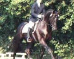 horse Rubinstern Noir (Hessian Warmblood, 1992, from Rubinstein I)