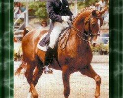 horse Grundstein I (Hanoverian, 1975, from Graphit)