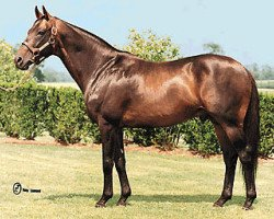 horse Fit to Fight xx (Thoroughbred, 1979, from Chieftain II xx)