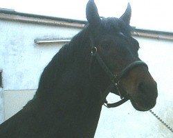 horse Piano II (Westphalian, 1988, from Pilot)