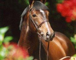 horse Quinar (Holsteiner, 1995, from Quidam de Revel)