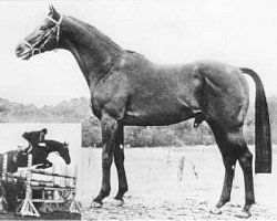horse Pericles xx (Thoroughbred, 1962, from Relic xx)