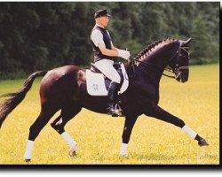 horse Epikur (Hanoverian, 1996, from Espri)
