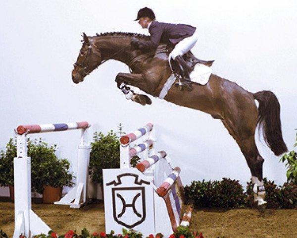 jumper Leonce (Holsteiner, 1998, from Limbus)