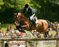 horse Fighting Alpha (Royal Warmblood Studbook of the Netherlands (KWPN), 1991, from Landjonker (Fruhling))