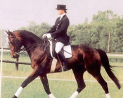 horse Templer GL xx (Thoroughbred, 1987, from Local Suitor xx)