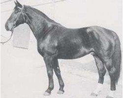 horse Disput (Hanoverian, 1967, from Diskant)