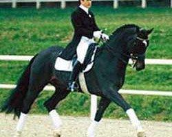 horse Dunhill H (Westphalian, 1990, from Diamantino)