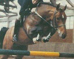 horse Aloube Z (Hanoverian, 1979, from Almé Z)