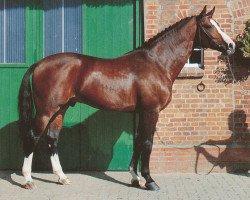 horse Ritual (Hanoverian, 1985, from Ramiro Z)
