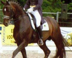 horse Welt Hit II (Oldenburg, 1992, from Weltmeyer)