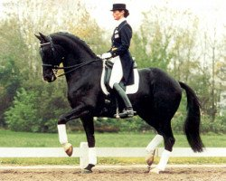 horse Ferro (Royal Warmblood Studbook of the Netherlands (KWPN), 1987, from Ulft)