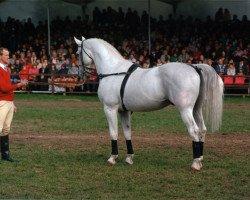 horse Kolibri (Mecklenburg, 1979, from Kobold I)