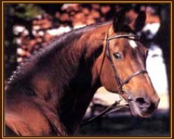 horse Caletto II (Holsteiner, 1978, from Cor de la Bryère)