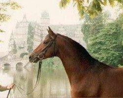horse Karon (Trakehner, 1981, from Arogno)