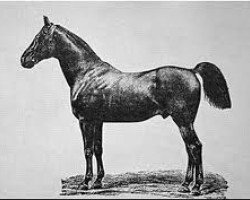 horse Bartlets Childers xx (Thoroughbred, 1716, from Darley Arabian ox)