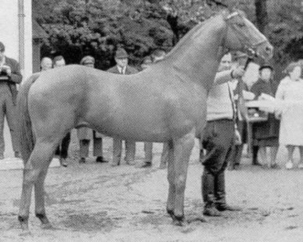 horse Pindar xx (Thoroughbred, 1949, from Abendfrieden xx)