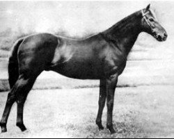 horse Vatout xx (Thoroughbred, 1926, from Prince Chimay xx)
