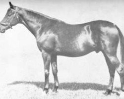 horse Bois Roussel xx (Thoroughbred, 1935, from Vatout xx)