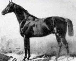 horse Kingdom xx (Thoroughbred, 1879, from Kingcraft xx)
