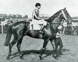 horse Abendfrieden xx (Thoroughbred, 1934, from Ferro xx)