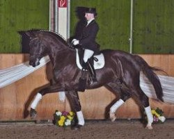 dressage horse Aaron (Royal Warmblood Studbook of the Netherlands (KWPN), 2005, from Florencio I)