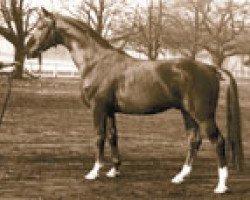 horse Sender (Hanoverian, 1955, from Senator)