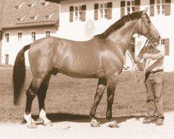 horse Rasso (Westphalian, 1971, from Ramiro Z)