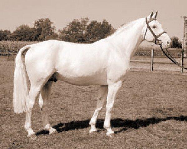 horse Godehard (Hanoverian, 1976, from Gotthard)