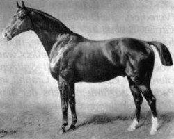 horse King (Hanoverian, 1890, from Kingdom xx)