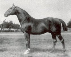 horse Kirkland (Hanoverian, 1904, from King)