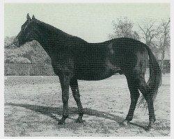horse Sudan xx (Thoroughbred, 1959, from Nizam xx)