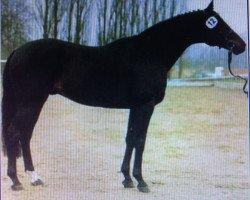 horse Oglio xx (Thoroughbred, 1981, from Athenagoras xx)