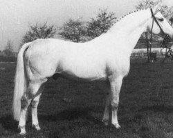 horse Raimond (Holsteiner, 1960, from Ramzes AA)