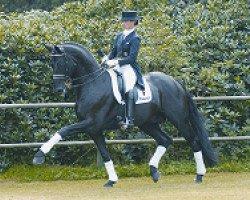 dressage horse Rubinero (Oldenburg, 1999, from Rubinstein I)