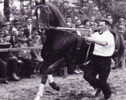 horse Woehler (Hanoverian, 1950, from Fluegeladjutant)