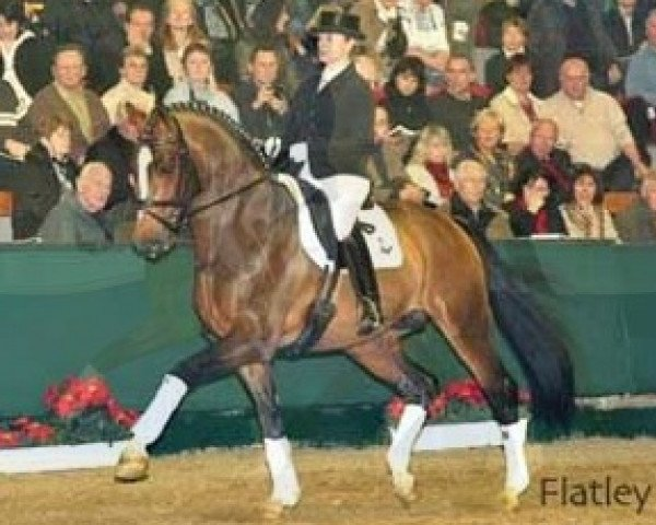 dressage horse Flatley 2 (Rhinelander, 2004, from Fürst Piccolo)