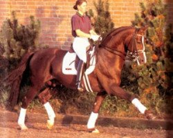 horse A Jungle Prince (Hanoverian, 1987, from Argentinus)