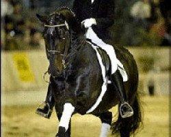 horse Davignon I (Hanoverian, 1988, from Donnerhall)
