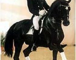 dressage horse Pik Labionics (Hanoverian, 1989, from Pik Bube I)