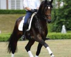 dressage horse Catoo (Holsteiner, 2007, from Con Air)