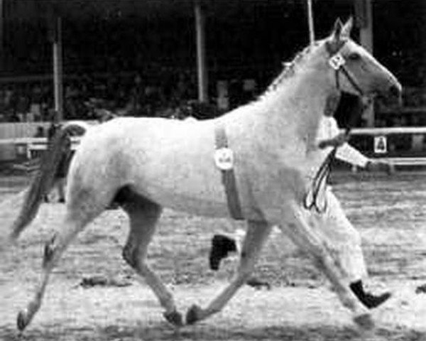 horse Worms (Hanoverian, 1960, from Wohlan)