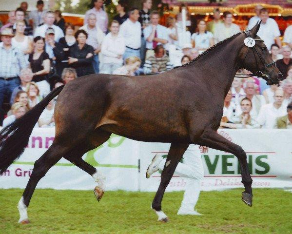 dressage horse Auguste Victoria 2 (Oldenburg, 2005, from Sandro Hit)