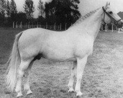 horse Matador (Holsteiner, 1948, from Makler I)