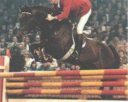 horse Calando I (Holsteiner, 1974, from Cor de la Bryère)