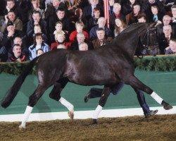 horse Donnerschwee (Oldenburg, 1988, from Donnerhall)