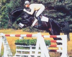 horse Fabriano (Hanoverian, 1987, from Wendulan)
