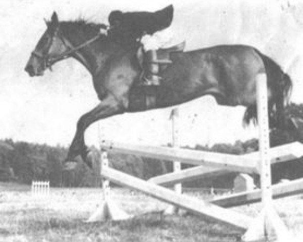 horse Quenotte (Selle Français, 1960, from Lurioso)