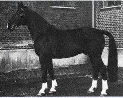 horse Dömitz I (Hanoverian, 1944, from Dollart)