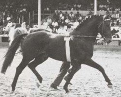 horse Aldato (Holsteiner, 1958, from Anblick xx)